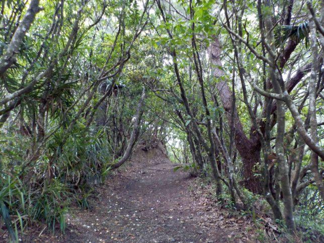中央山展望台までの道