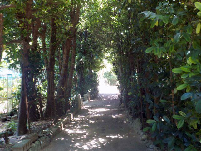 備瀬の並木道