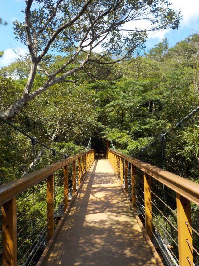 沖縄やんばるの比地大滝をトレッキング
