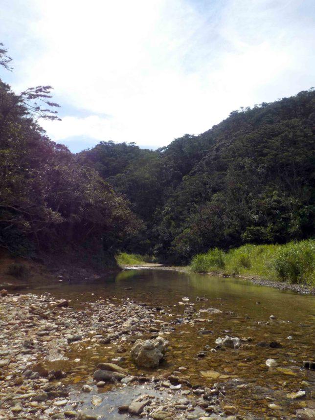 沖縄 やんばる 川