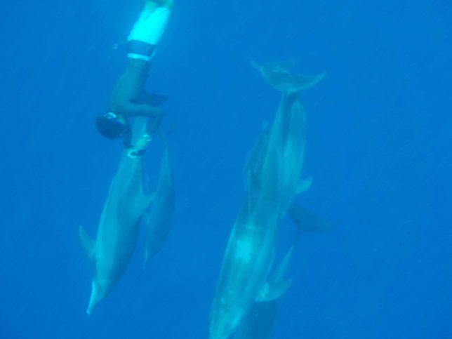 小笠原の海でイルカを見る