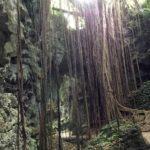 【沖縄南部旅行記】 ガンガラーの谷 ~ 亜熱帯 神秘の森