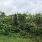 沖縄移住_庭に南国ガーデンを作りたい①現況は藪