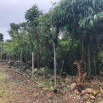 沖縄移住_庭に南国ガーデンを作りたい②伐採したら石垣がでてきました